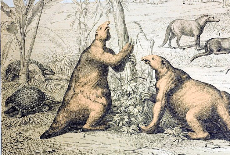 1862 Giant Ground Sloth Megatherium
